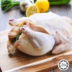 Fresh Whole Chicken 1.7kg per bird