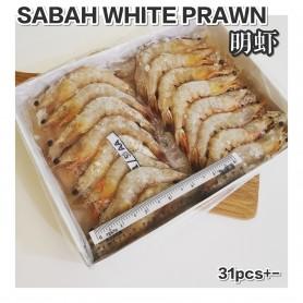 Sabah White Prawn 41/50